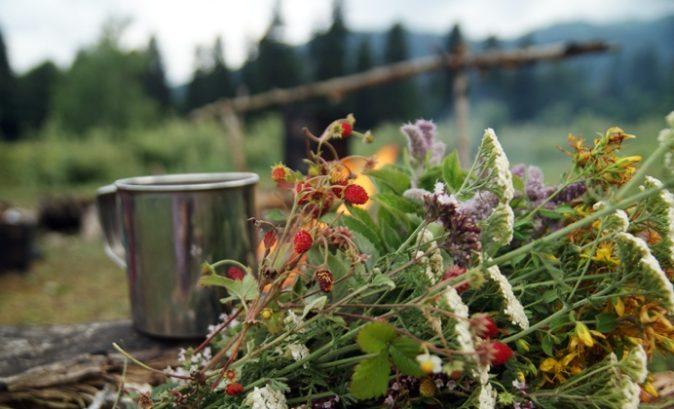 Böbrek kisti için bitki tedavisi